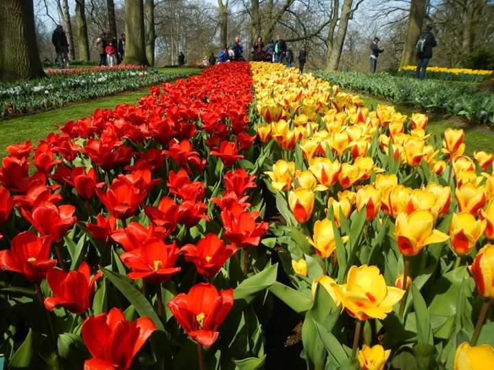 Parc de Keukenhof Amsterdam