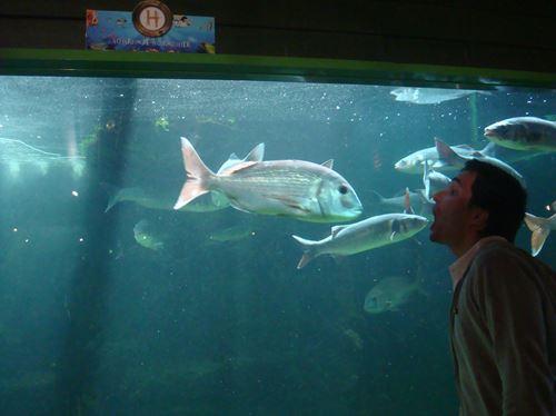 Claironyva France Vendée Aquarium de Noirmoutier